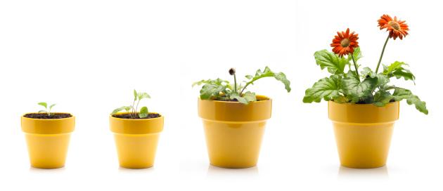 Progress「Gerbera Daisy Growing」:スマホ壁紙(19)