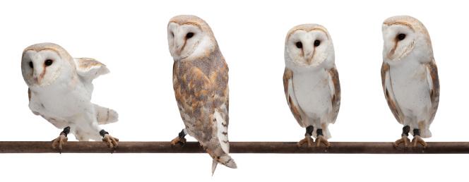 Four Animals「Barn owls」:スマホ壁紙(4)