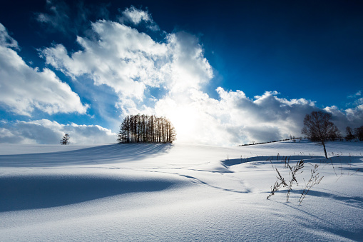 Hokkaido「Larch forest on the snow hill and blue sky in Biei」:スマホ壁紙(5)