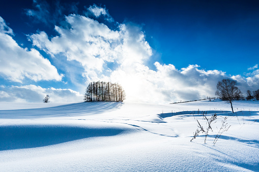 Hokkaido「Larch forest on the snow hill and blue sky in Biei」:スマホ壁紙(3)