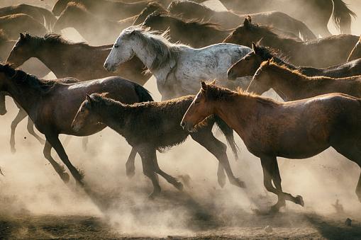 Horse「Herd of Wild Horses Running in Dust」:スマホ壁紙(10)