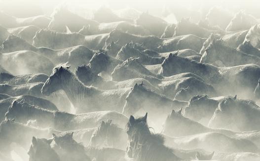 Horse「Herd of Wild Horses Running in Dust」:スマホ壁紙(0)