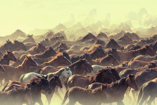 Stallion「Herd of Wild Horses Running in Dust」:スマホ壁紙(5)