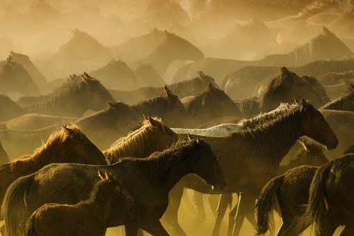 Stallion「Herd of Wild Horses Running in Dust」:スマホ壁紙(18)