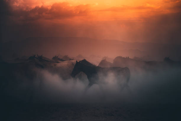 Herd of wild horses running gallop in dust at sunset time:スマホ壁紙(壁紙.com)