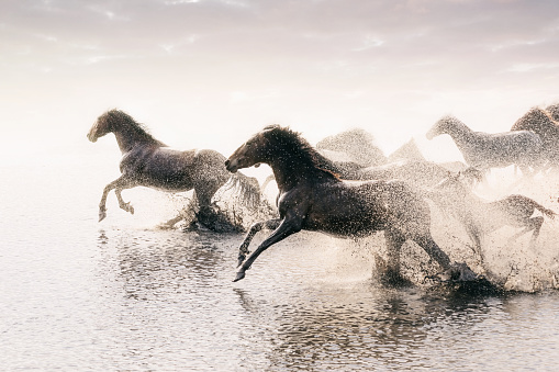 Endurance「Herd of Wild Horses Running in Water」:スマホ壁紙(6)