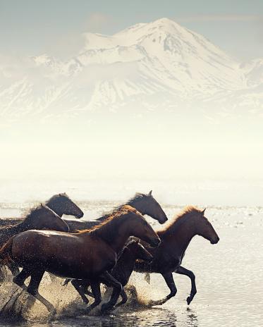 Endurance「Herd of Wild Horses Running in Water」:スマホ壁紙(12)