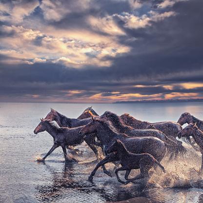Shallow「Herd of Wild Horses Running in Water」:スマホ壁紙(14)