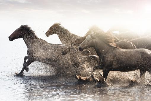 Horse「Herd of Wild Horses Running in Water」:スマホ壁紙(8)