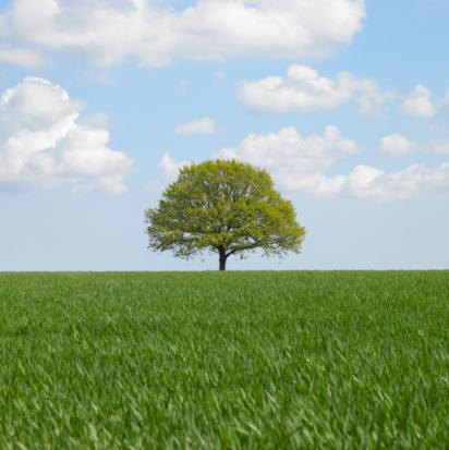 Single Tree「Lone tree in field」:スマホ壁紙(15)