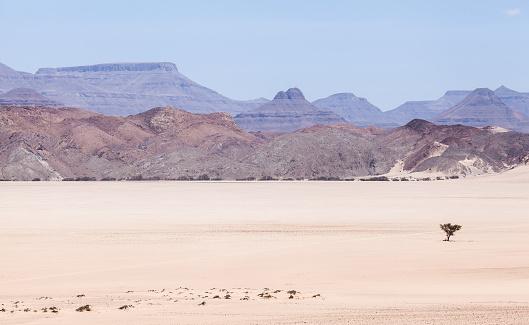 Wilderness「Lone tree in Mountain Desert landscape, Namibia」:スマホ壁紙(7)