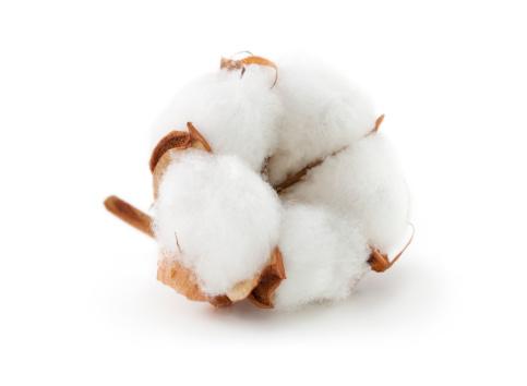 Cotton「Cotton boll」:スマホ壁紙(4)