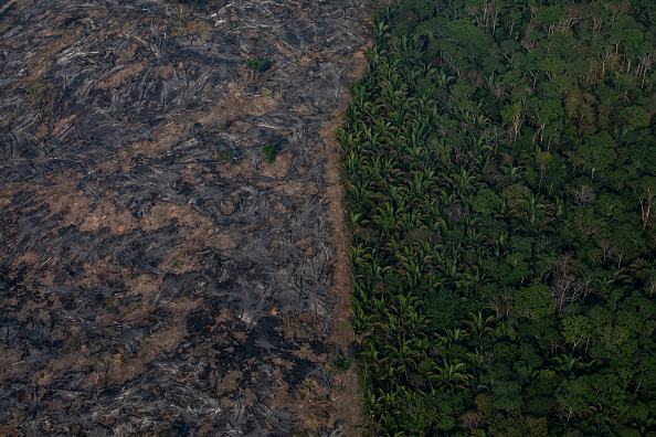 Brazil「Record Number Of Fires Torch Brazil's Amazon Forest」:写真・画像(7)[壁紙.com]