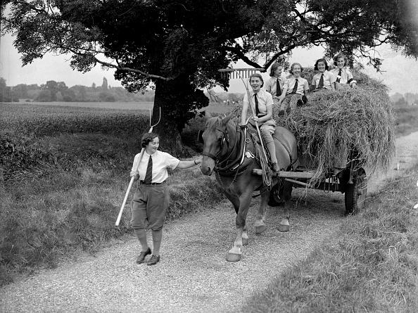 Haystack「Hay Cart」:写真・画像(1)[壁紙.com]