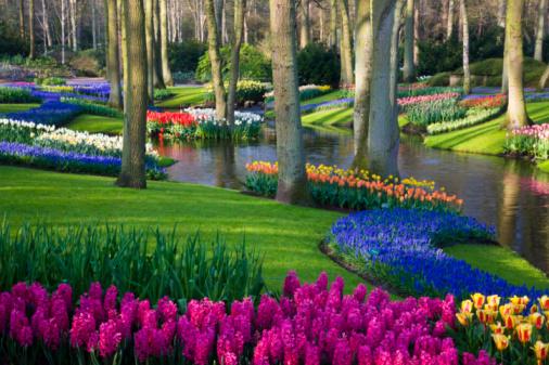 Keukenhof Gardens「Pond and Spring Flowering Blubs Keukenhof Gardens」:スマホ壁紙(5)