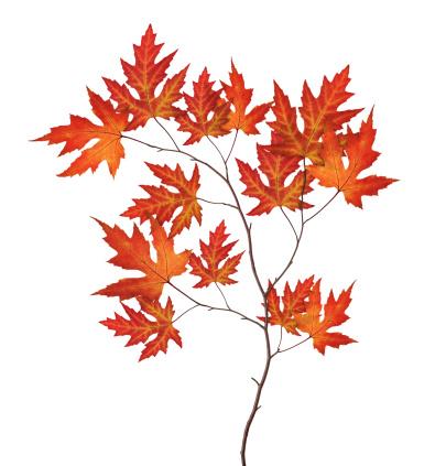 かえでの葉「レッドの秋のブランチ」:スマホ壁紙(6)