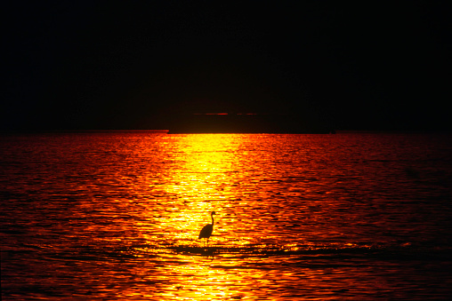 Shallow「Heron, standing in the shallow part of the ocean, in the lsunset light. The shadow of an oil Tanker visible in background. English Bay, Vancouver, British Columbia, Canada」:スマホ壁紙(0)