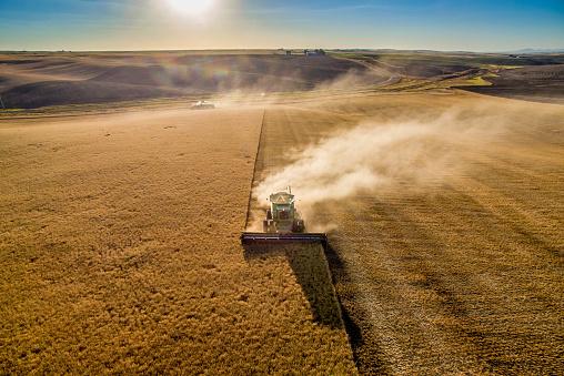 Agricultural Activity「Palouse harvest time」:スマホ壁紙(1)