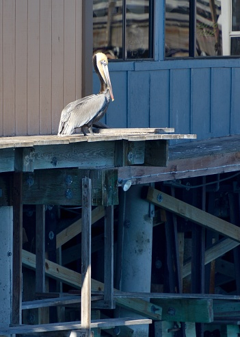 City of Monterey - California「Monterey, the pelicans rest on the piers.」:スマホ壁紙(7)