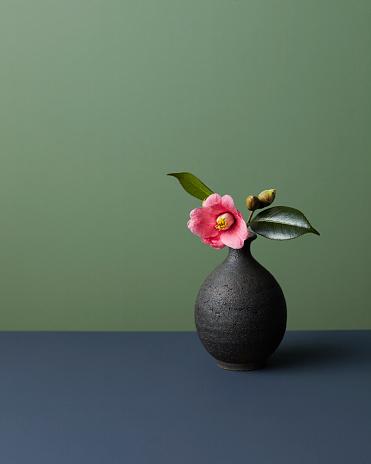 Colored Background「Japanese camellia」:スマホ壁紙(12)
