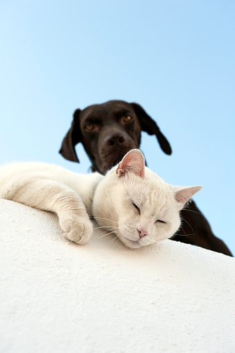 Greek Islands「Viarama Dog and White Cat」:スマホ壁紙(9)
