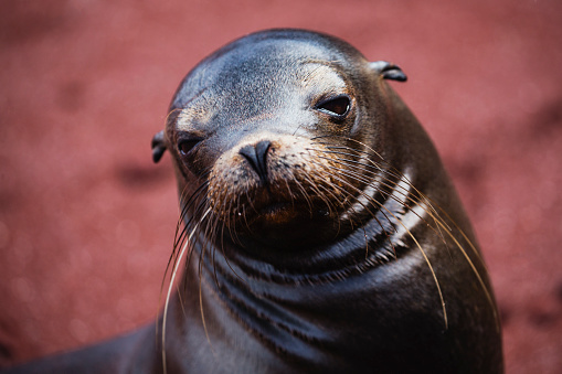 Sea Lion「A sea lion pup」:スマホ壁紙(3)
