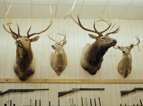 農村の風景「Deer head trophies and rifles mounted on wall」:スマホ壁紙(13)