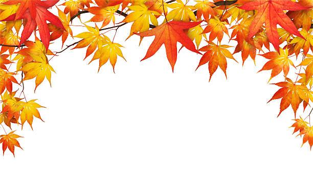 紅葉がすっかりにホワイト:スマホ壁紙(壁紙.com)