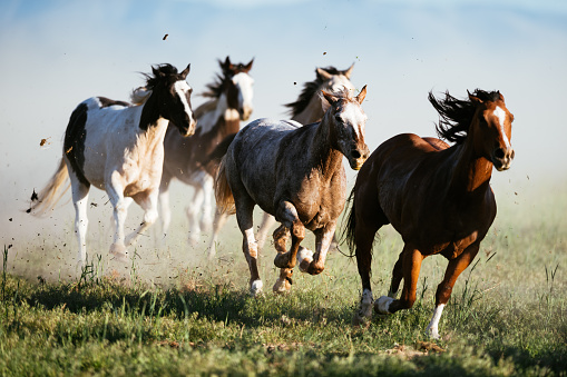 Horse「Beautiful landscape in Wild West in USA - Wild horses galloping」:スマホ壁紙(2)