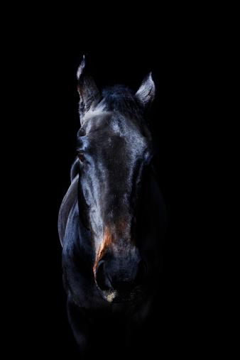 Horse「Horse」:スマホ壁紙(8)