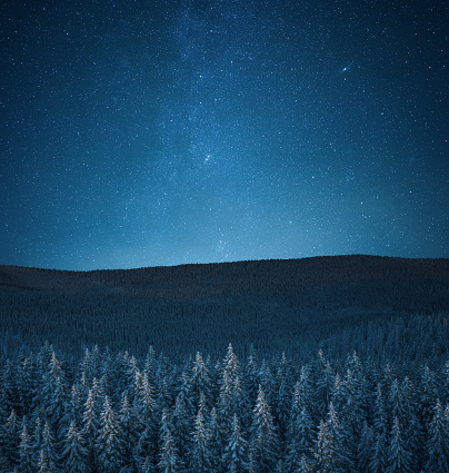 Pine Woodland「Snowcapped Forest Under The Stars」:スマホ壁紙(1)