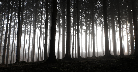Emotional Stress「Forest landscape with dramatic silhouettes, miniature effect and selective focus」:スマホ壁紙(19)