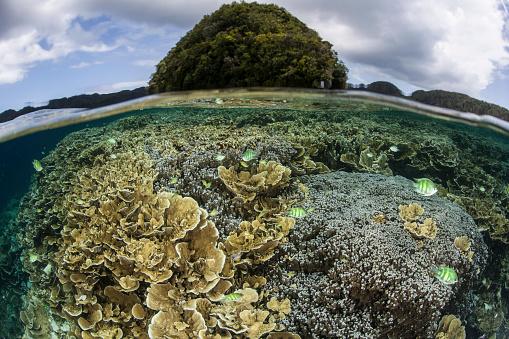 Shallow「Reef-building corals grow inside Palaus lagoon.」:スマホ壁紙(9)