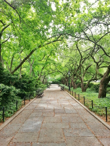 Paving Stone「USA, New York State, New York City, Pathway in Central Park」:スマホ壁紙(5)
