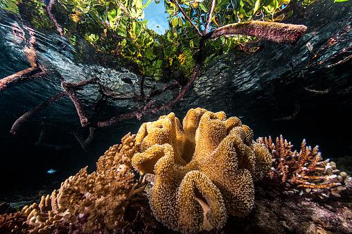 Soft Coral「Marine life of Raja Ampat, West Papua, Indonesia.」:スマホ壁紙(4)