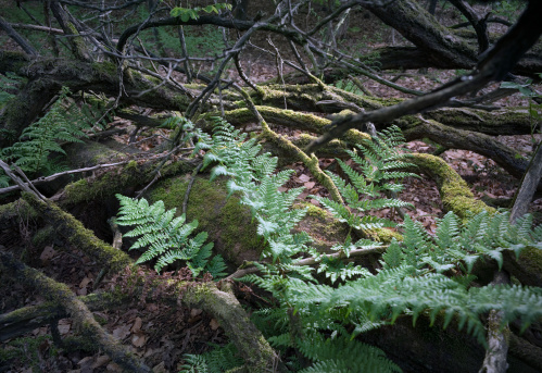 North Brabant「Young fern plants at a forest in the Netherlands」:スマホ壁紙(16)