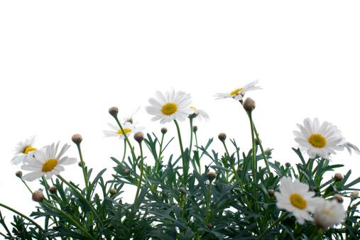 Wildflower「Beautiful flowes」:スマホ壁紙(15)