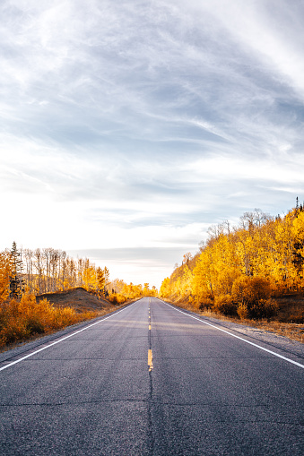 Aspen Tree「Beautiful Fall Colors Autumn Change Shot of Aspen Trees Standing In the Highway Into the Grand Mesa National Forest in Western Colorado」:スマホ壁紙(15)