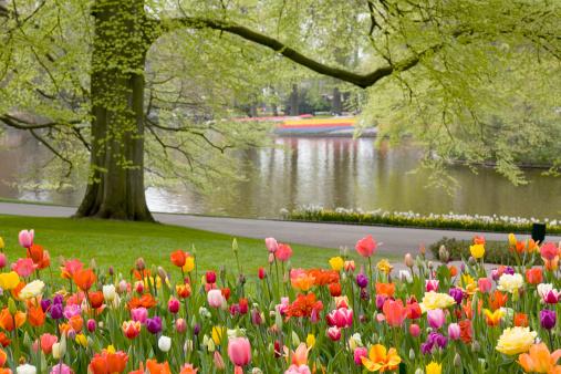 Keukenhof Gardens「Beautiful flower bed of tulips」:スマホ壁紙(3)