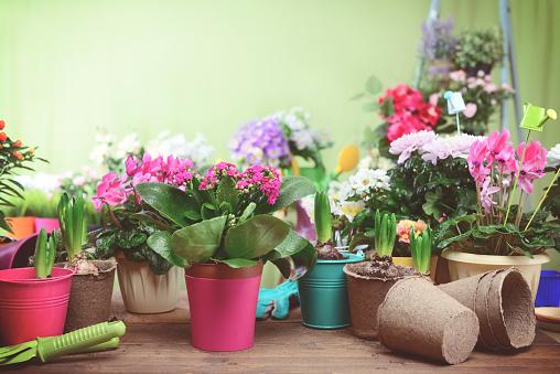 Planting「beautiful flowering plants and flowers in flower pots」:スマホ壁紙(17)