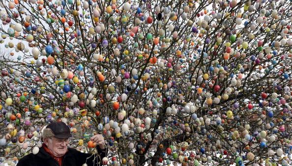 Tree「Man Decorates Tree With 10,000 Easter Eggs」:写真・画像(19)[壁紙.com]