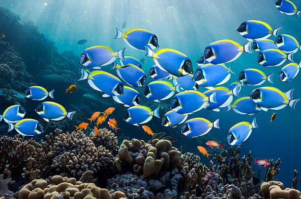 Coral reef scenery with surgeonfish:スマホ壁紙(壁紙.com)