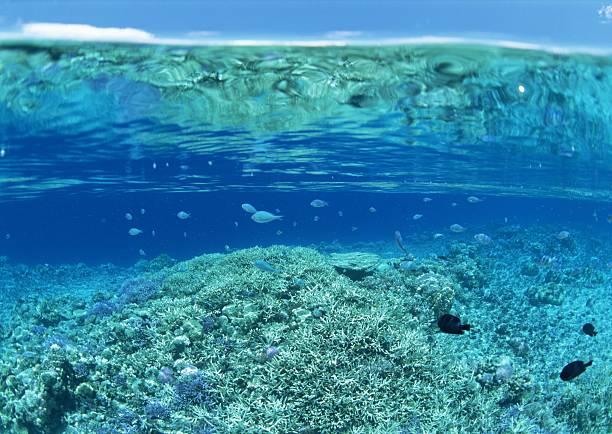 水中の宝石のまとめ:2007年01月05日(壁紙.com)