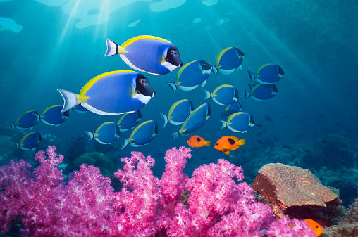 Andaman Sea「Coral reef scenery with tropical fish」:スマホ壁紙(14)