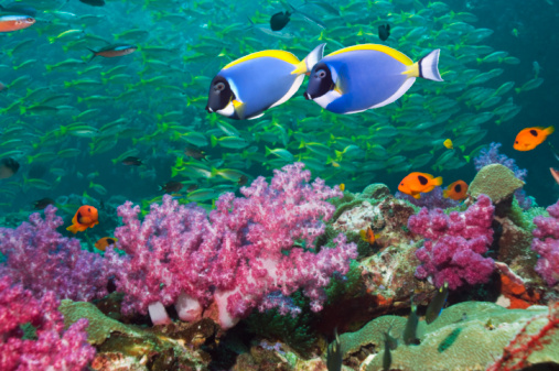 Soft Coral「Coral reef scenery with tropical fish」:スマホ壁紙(4)