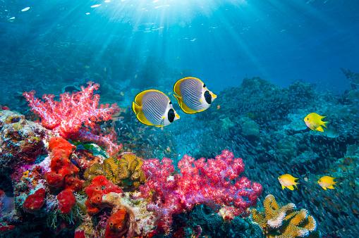 Andaman Sea「Coral reef scenery with tropical fish」:スマホ壁紙(0)
