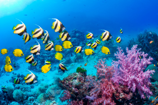 Coral - Cnidarian「Coral reef scenery」:スマホ壁紙(2)