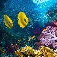 海の生き物カテゴリー(壁紙.com)