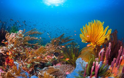 Asia「Coral reef」:スマホ壁紙(8)