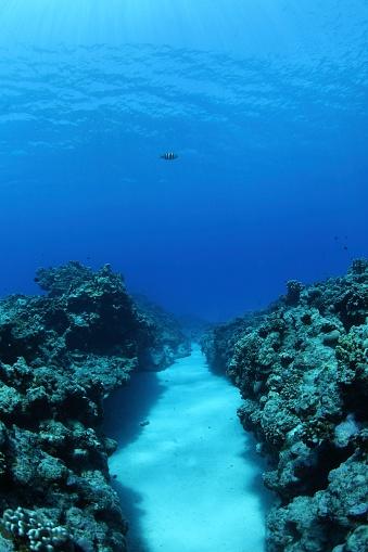 Northern Mariana Islands「Coral reef, Saipan, Northern Mariana Islands」:スマホ壁紙(5)